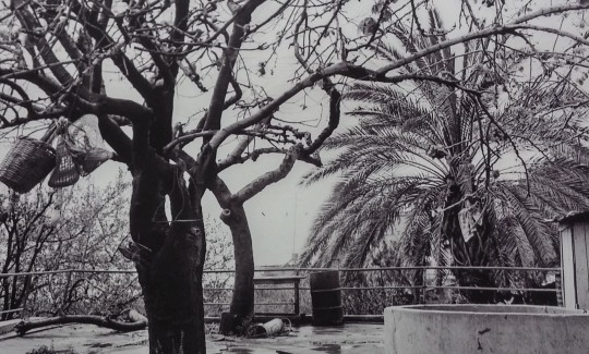 ואדי שִׂיחַ, 1976, הדפס פיגמנט